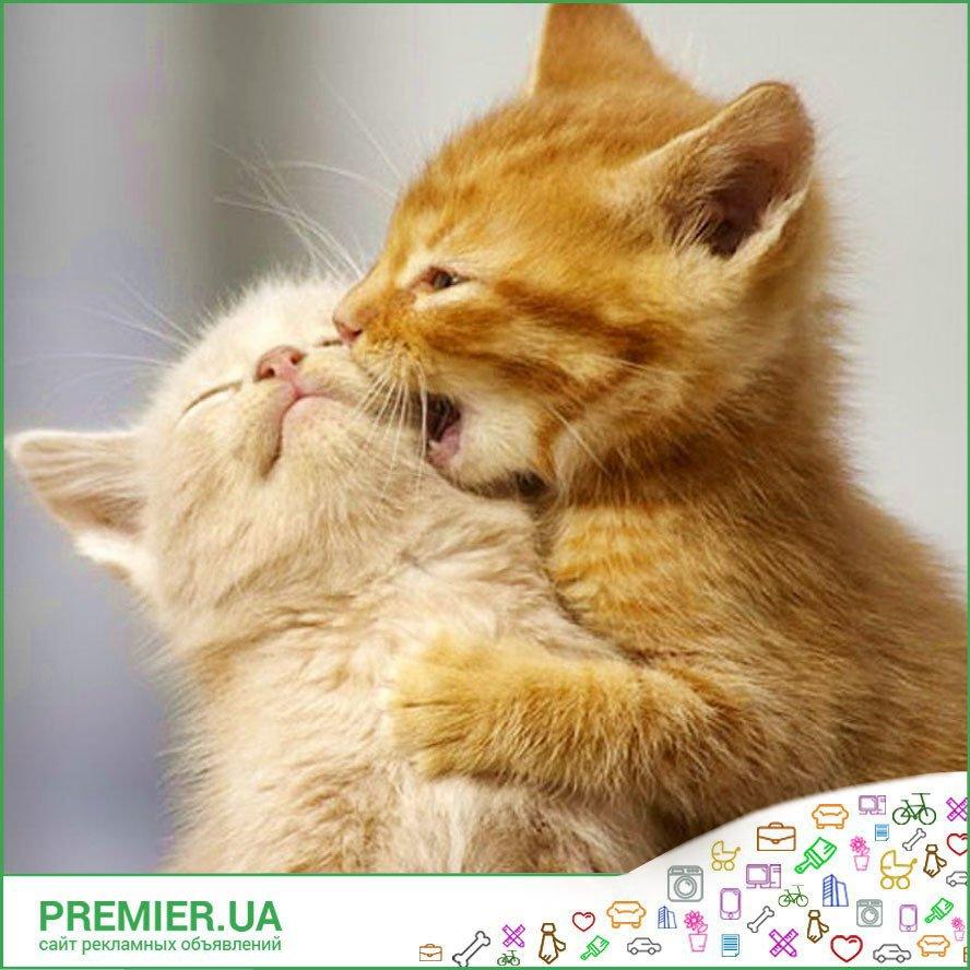 Картинки Люблю, целую, обнимаю! (41 фото) Прикольные картинки и юмор