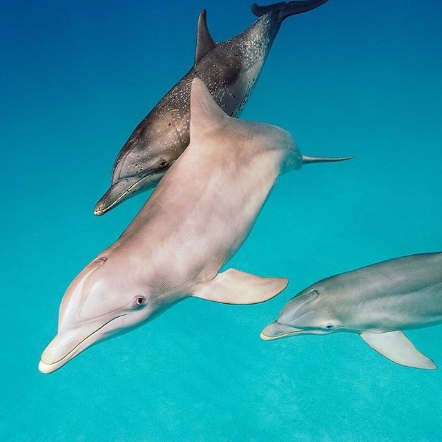 Love dolphins...they're so beautiful and fascinating ���� https://t.co/7ufko61ZUQ https://t.co/afVhjPmdFj