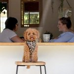 Albert Park wellness venue Greenfields gets the paws up