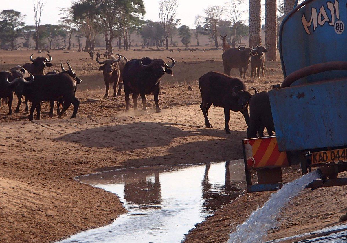 Bringing water to Kenya's drought-stricken wildlife