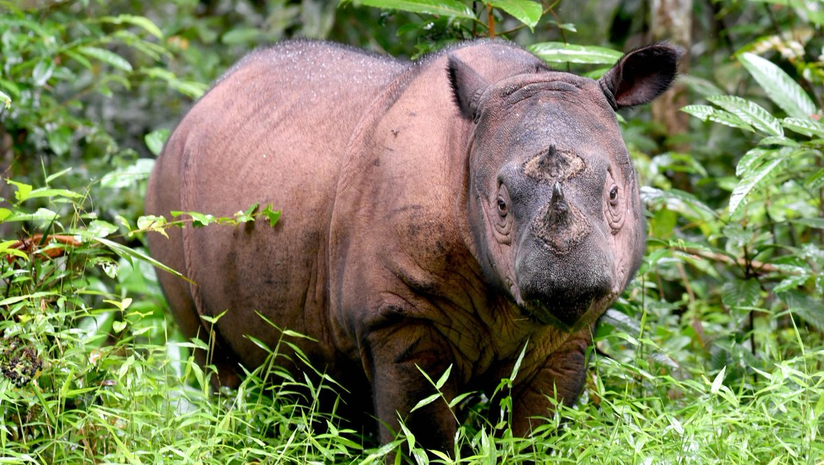 Poachers broke into a French zoo to kill a 5-year-old rhinoceros for its horn
