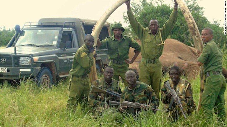 Poachers have killed a rare giant tusker elephant in Kenya