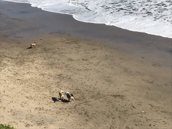 Watching dogs at the dog beach! https://t.co/NrqEeNRs0d