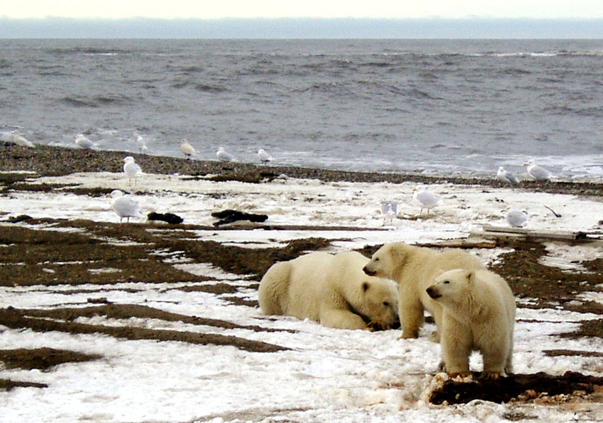 Finland taking over Arctic Council, and climate leadership, from U.S.