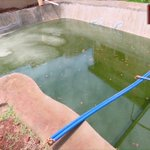 Using harvested rainwater for fish farming