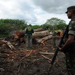 Brazil Launches Program to Trace Illegal Logging in Amazon