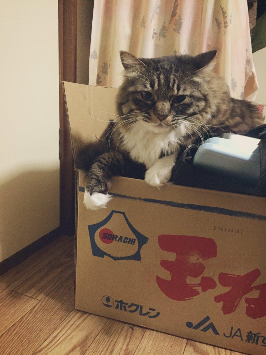巣といえばダンボール箱放置したらすぐ巣を作りにくる松太郎も見て