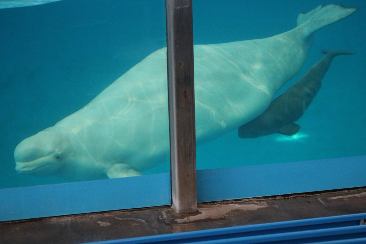 RT @peta: RT if you want marine mammal captivity banned everywhere! https://t.co/crynF1k8qk