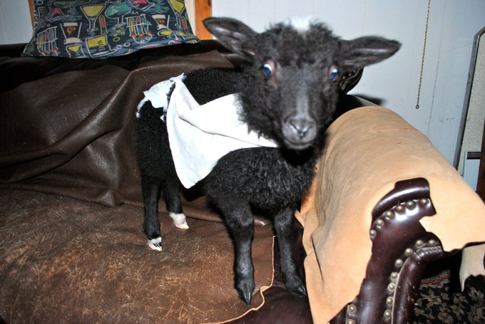 I\m sending you a lamb in underpants and split cape-style suspenders. Happy birthday!