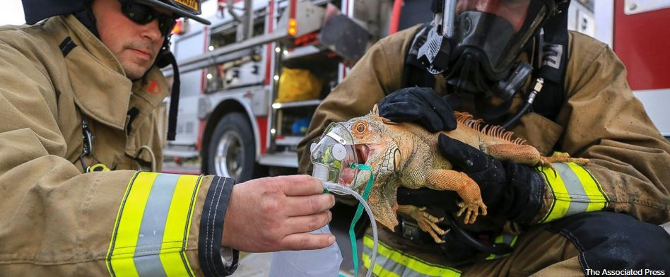 Fire crews rescue iguana from eastern Oregon house fire
