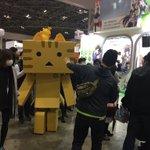 にゃんぼー!です。トラちゃん、アニメジャパンビリビリブースからファミリーアニメフェスタエリアまで歩いて移動しました!まも