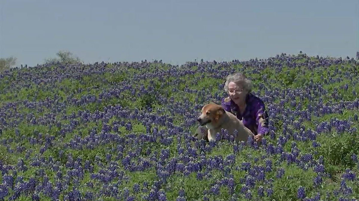 Inside the majesty of Chappell Hill's bluebonnets. #ABC13 https://t.co/b4Xqgh1gno