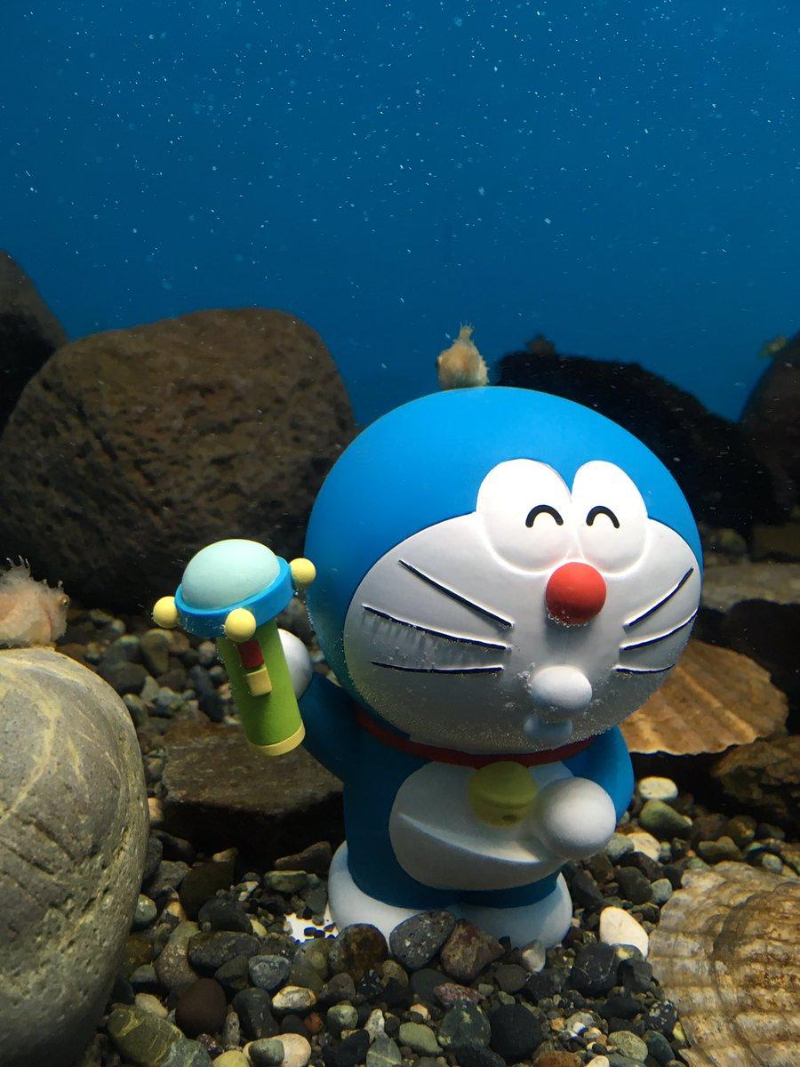 【仙台うみの杜水族館】おはようございます。仙台地方はあいにくの雨ですが、本日も18:30まで営業中です。映画ドラえもん大