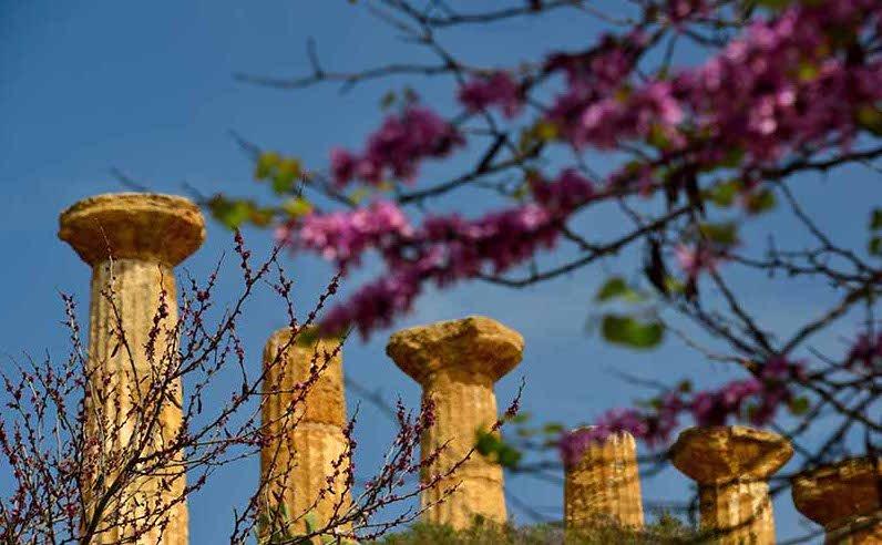 La Valle dei Templi di Agrigento vince il premio istituito @MiBACT ogni anno per miglior Paesaggio italiano → https://t.co/WFA3192ZiU