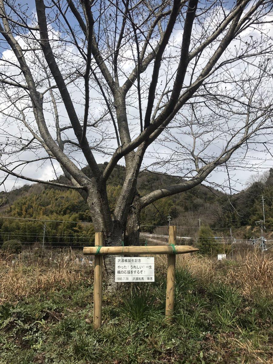竹原も桜の開花までもう少しですかね?今日バンブージョイハイランドの楓ちゃんの記念プレートを取り付けてきました☆お待たせし