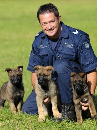 RT @PetsNeedingHELP: Love 4 #Dogs Police Puppies in Training  #dogs #pets #animals #dogsoftwitter https://t.co/VY2EN4q0xM