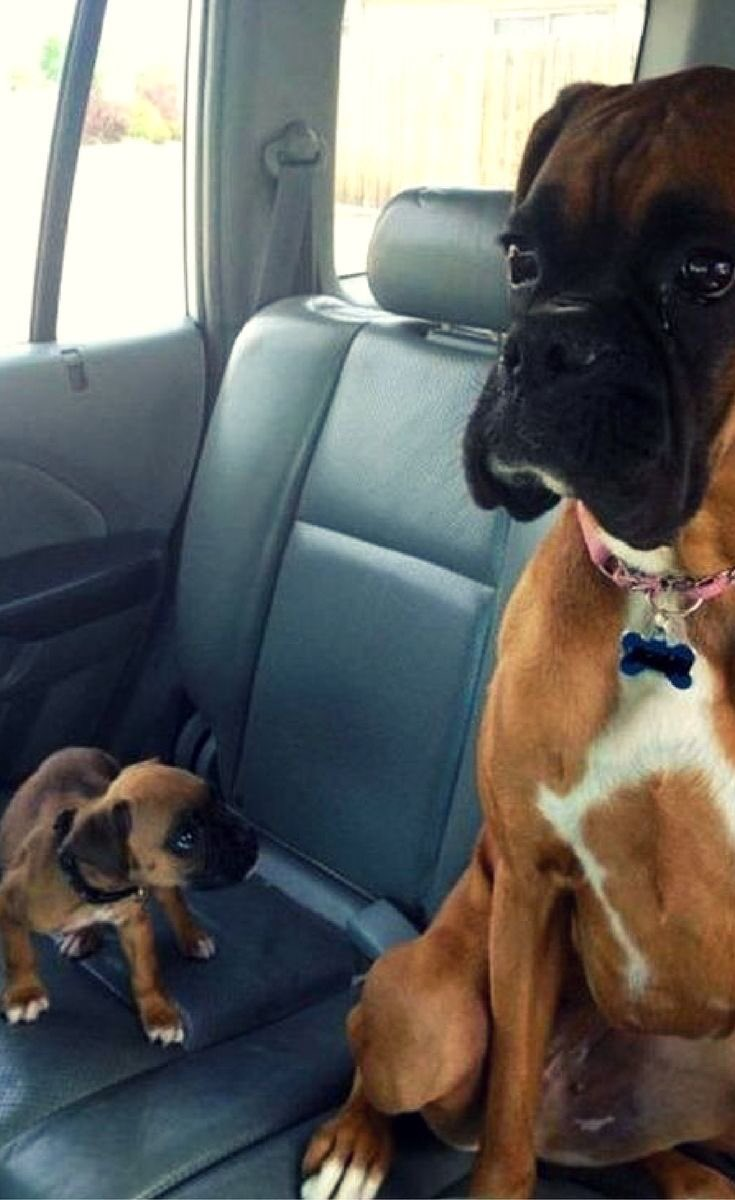 Please listen to me. #dogcelebration #dogsoftwitter https://t.co/QtFyzaKYy8