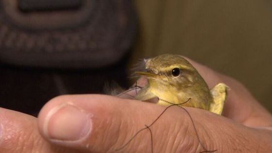 No let-up in Cyprus bird poaching