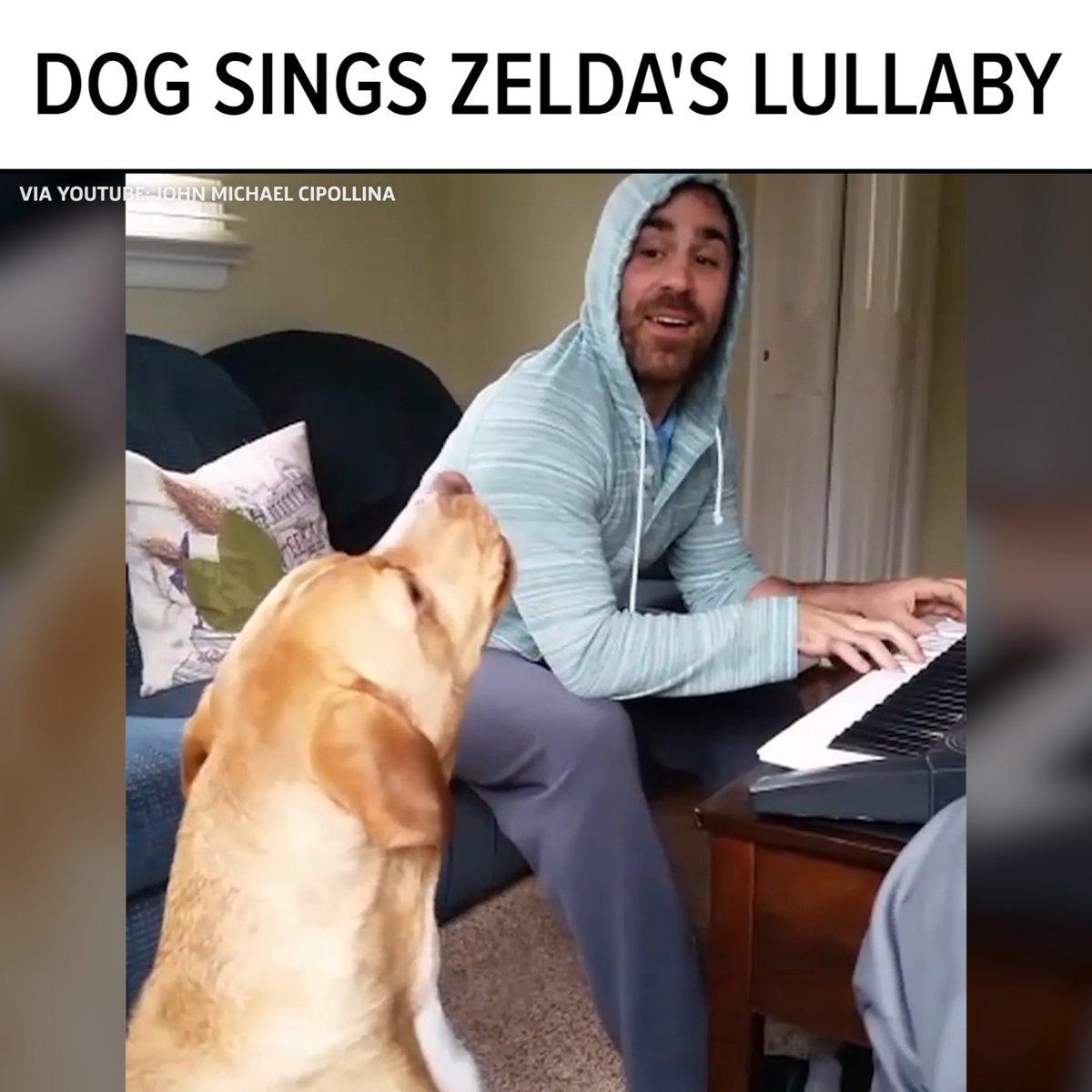 The Legend of Zelda: Howl of the Wild 🐶   Original video: https://t.co/ygbMMz8t3Z