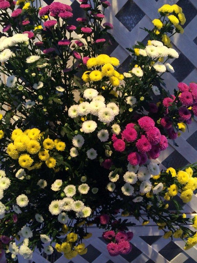 『暮らしに花をそして音楽を Vol.6』仙台フィル ✖️           仙台花き市場指揮者はアンドレア・バッティス