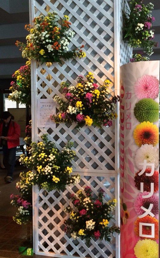 今回は、企画の途中から国内外の花市場の応援がありました。『カリメロ』はオランダで開発され、フランス資本の会社がベトナムで