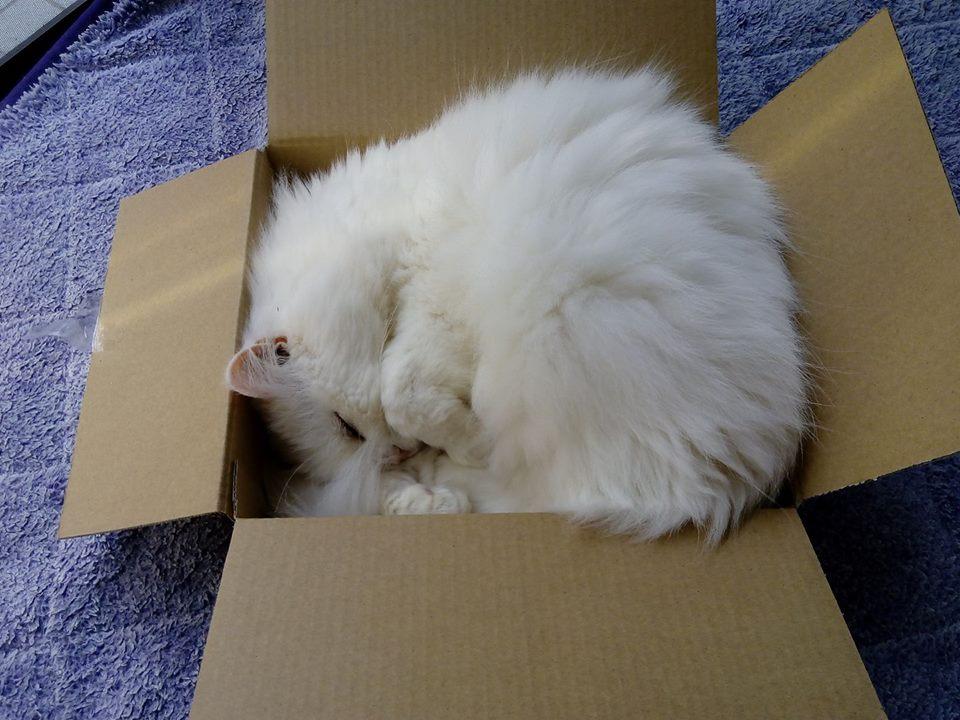 フレディ(13歳オス)温厚で甘えん坊。寄り添い猫です。 3月のライオン、ワカコ酒、キングダム、その他色々。マンガばっかり