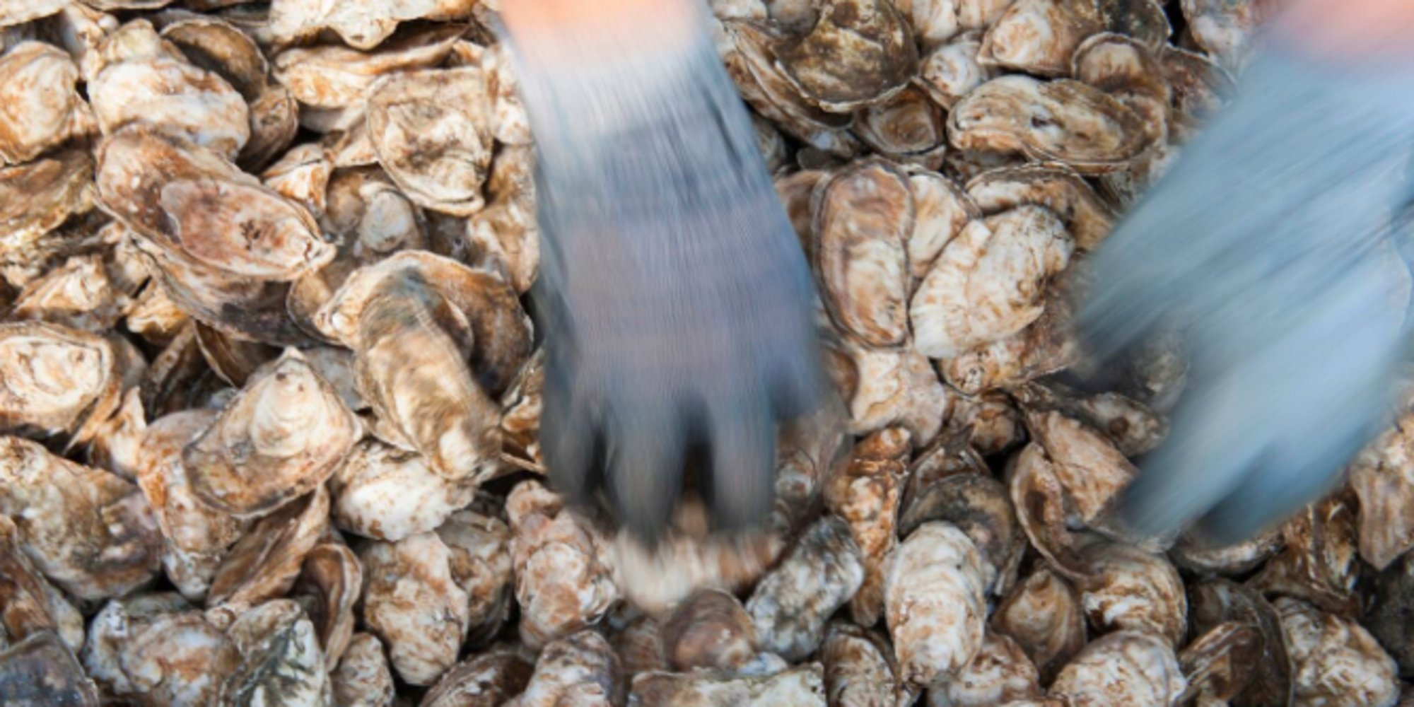 Trump's proposed cuts to Chesapeake Bay cleanup alarm the revived oyster industry https://t.co/hrImBKkv1B https://t.co/PxbOG9bf1Y