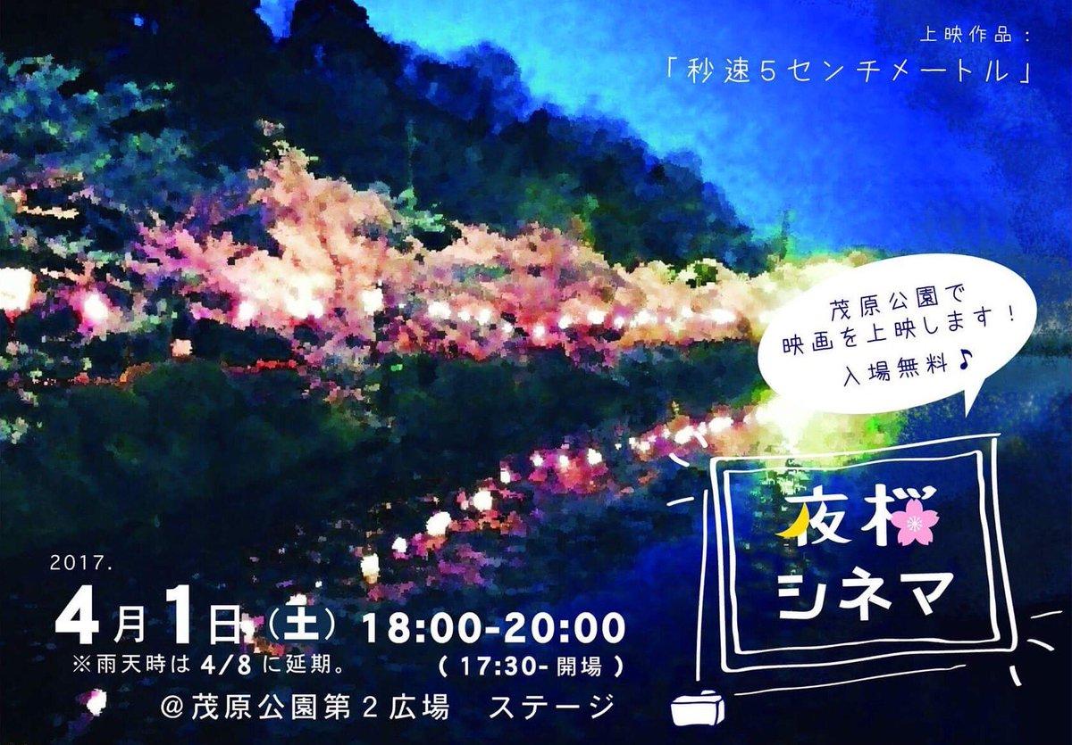 4/1土曜日は茂原公園で夜桜シネマ(*´ο`*)🌸🌸#夜桜シネマ#千葉  #茂原  #茂原公園#お花見  #夜桜  #映