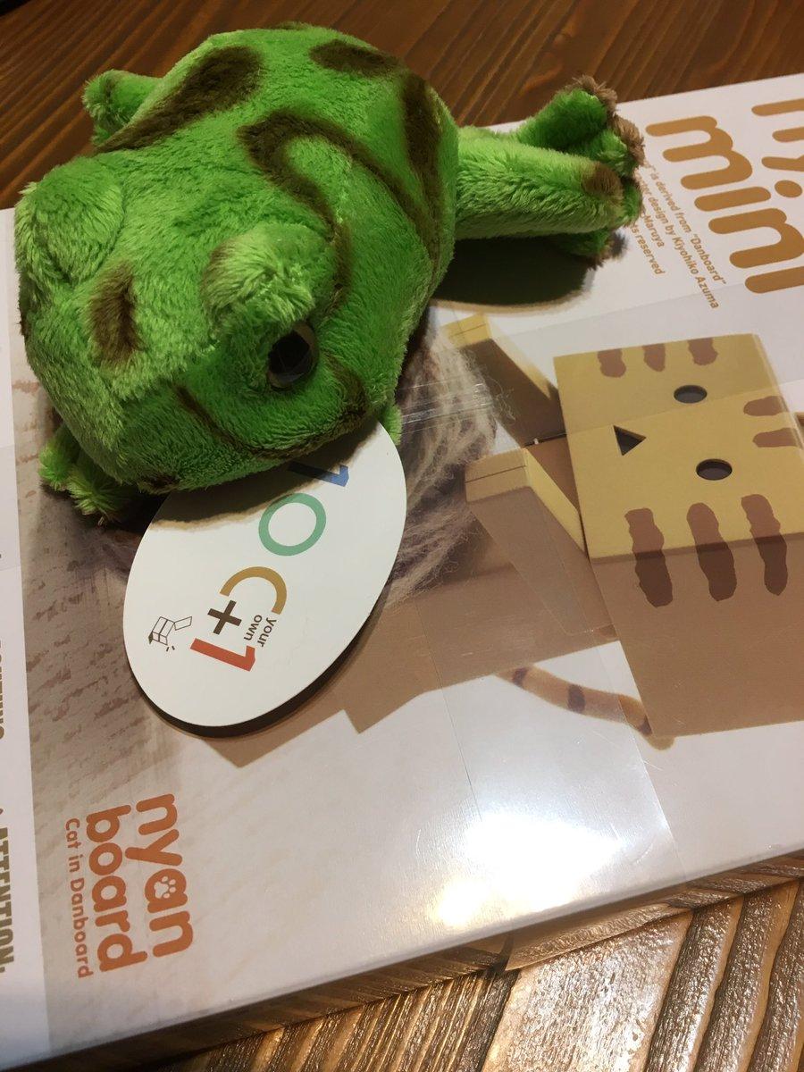 昨日 日本橋行ったついでに ヤドクガエルとにゃんぼーという戦利品