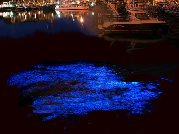 Tasmania's gorgeous, glowing water is a sign of something sinister https://t.co/eZ1HQjD7gE https://t.co/K6fZxFgT8a
