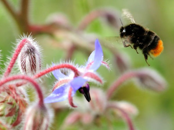 You really can help save bees by planting wildflowers https://t.co/sFebRLLyRt https://t.co/Az6ySb887b