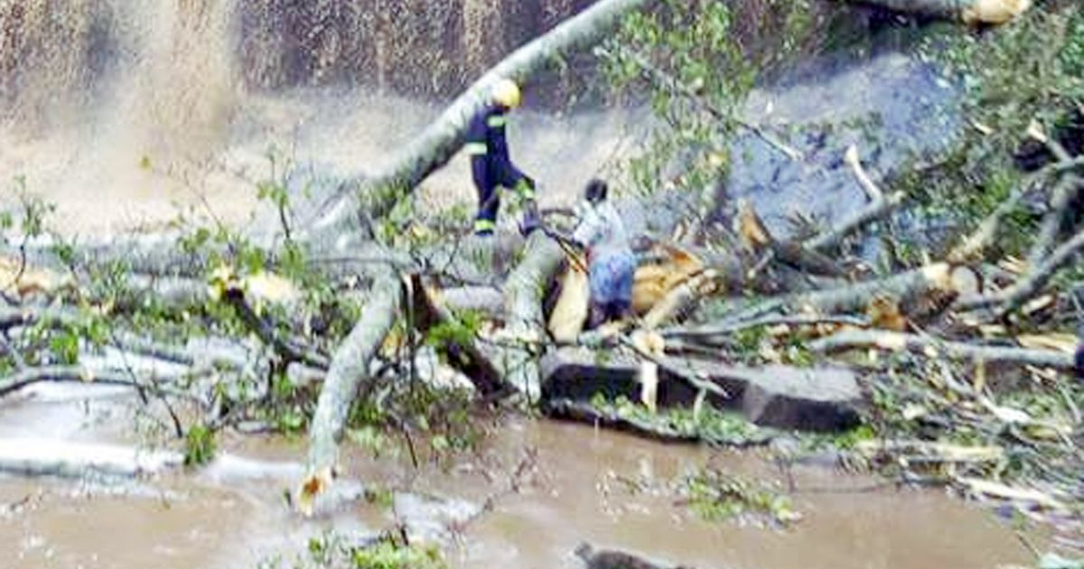 Freak accident at waterfall kills 20 high school students after trees fall on them during storm