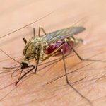 Limpopo on high alert as Botswana issues Malaria warning