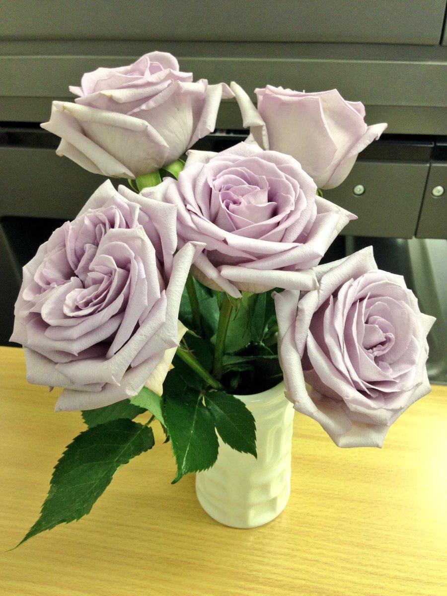 紫のバラ!オープンローズでお日持ち2日ですがよろしいですか?と言われたけど思わず買ってしまった! #ガラスの仮面 って今