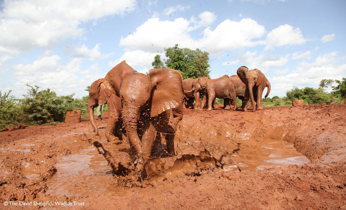 RT @DSWT: Splash! Happy #WorldWaterDay – help us keep the taps on for wildlife: https://t.co/nvnlWGddE3 https://t.co/XRY2TcVPhA