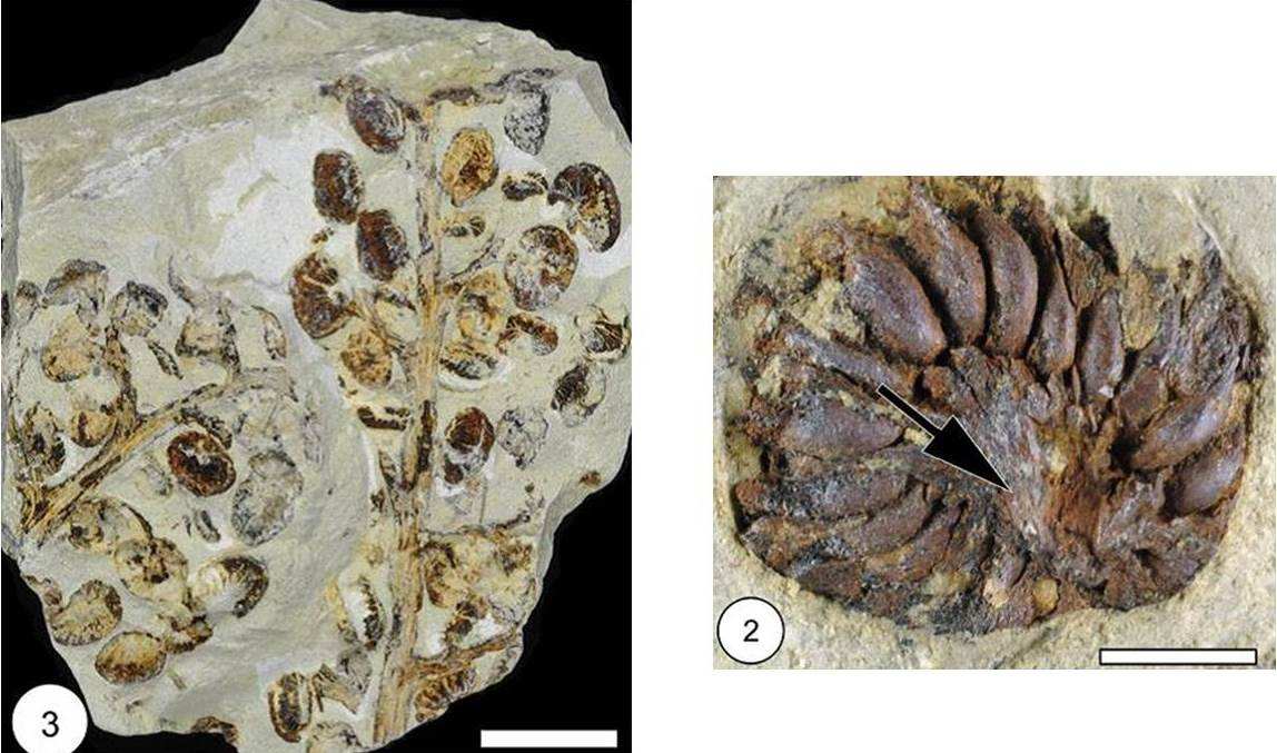 test Twitter Media - At last night's @parkvillemo Board of Aldermen meeting, @ParkUniversity introduced a new plant fossil named Parkvillia northcutti. https://t.co/VZFlHEClrd