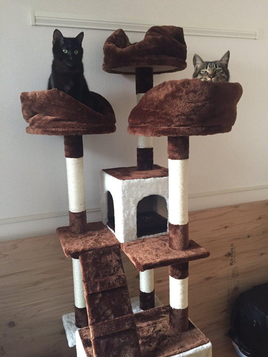 夜中のテンションで猫タワー組み立てた https://t.co/1jFiSPgPuo