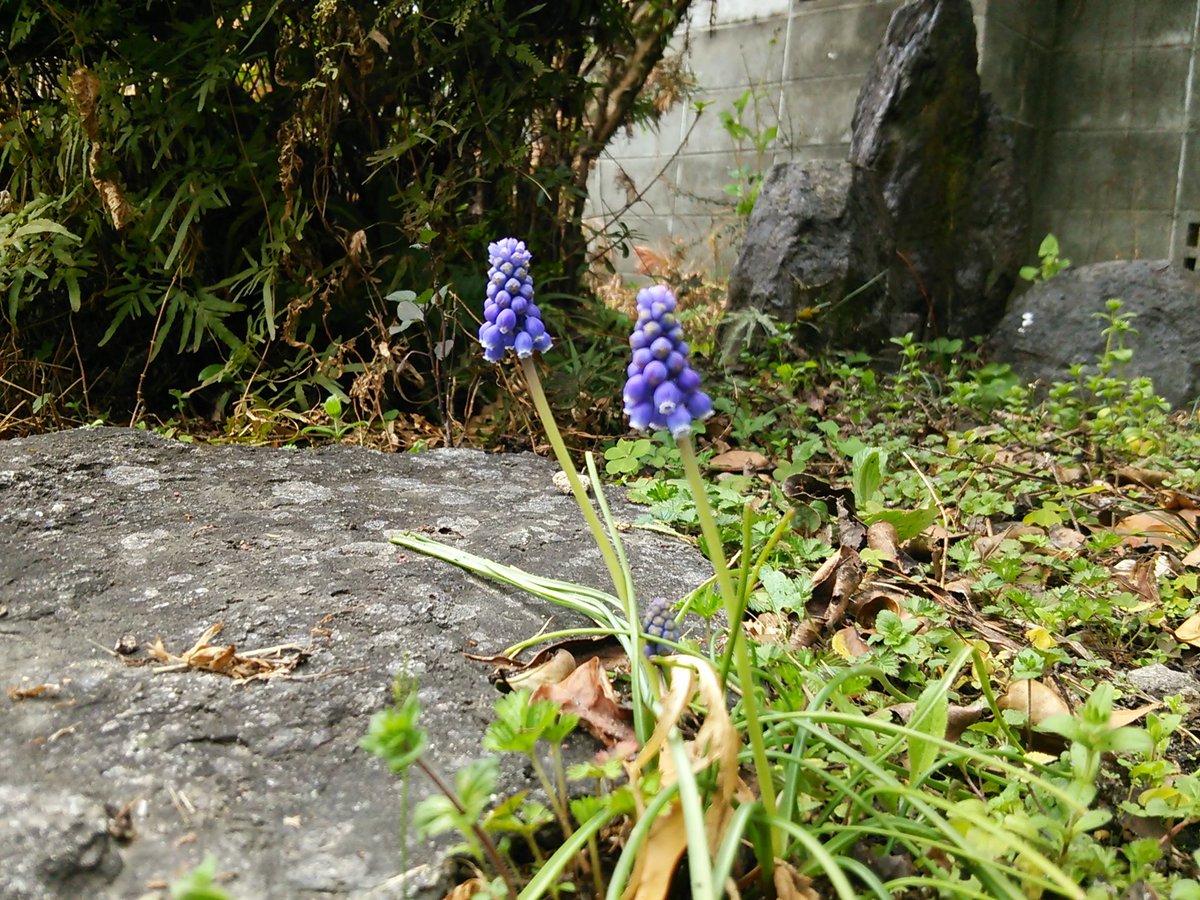 おはようございます。少し寒い朝でしたが、確実に春が近づいていますね。ニャル子さん、起きましょうか(*´▽`*)