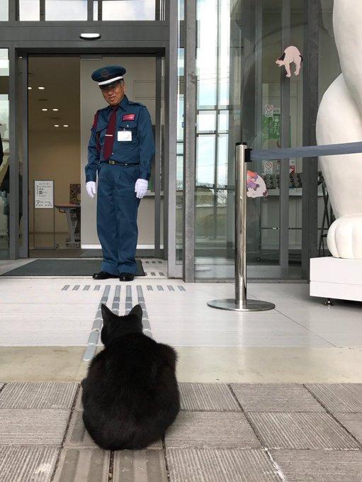 """【にゃーん】""""猫アート""""展示中の美術館で猫と警備員が攻防戦繰り広げる https://t.co/s0L4jXe3oA  美術館に入ろうとした黒猫を警備員がブロック。館内に展示されている像に、本物の猫も興味津々なのだとか。"""