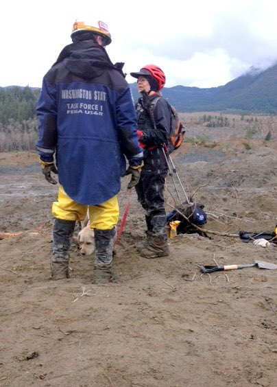 test Twitter Media - Three years since 43 lives were lost in the OSO landslide. Life changing for me, my search dog and  K9 teams that took part in the search. https://t.co/BmjJPacSXG