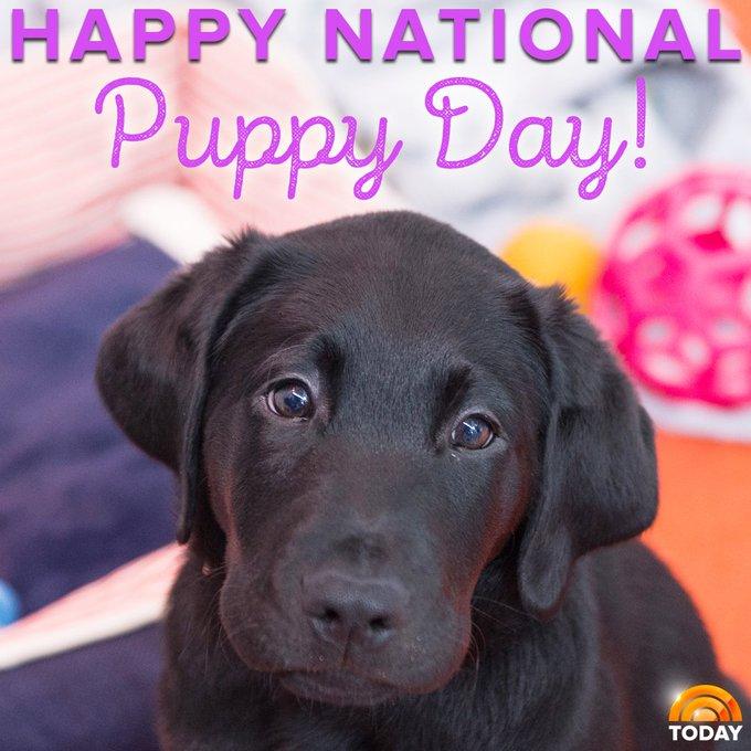Happy #NationalPuppyDay!