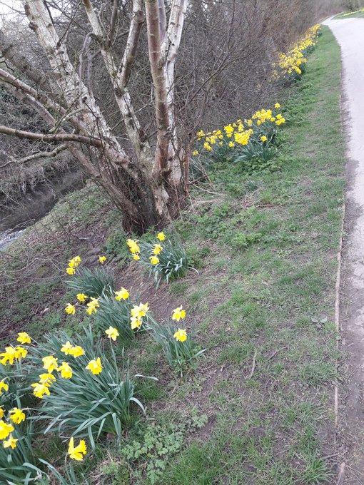 1 pic. Blummin #spring https://t.co/bu69nkqP5W