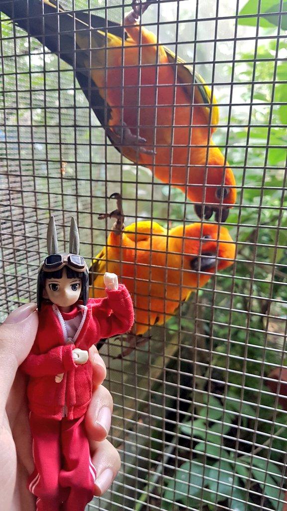 こちらこそよろしくお願いします!うちのメイン子は飛鳥型の空子ちゃんと申します!実は私は海外の神姫マスターですから日本語