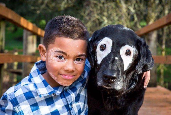 Menino com vitiligo acha amigo ideal: cão com o mesmo problema. https://t.co/o8pjuNWlrU [@BlogPageNFound]