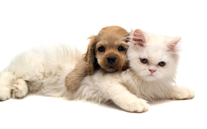 Got pets? Get coupons, freebies and great info from Purina!  ►► https://t.co/btzTioD27m https://t.co/lrF1qUe1YH