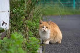茶トラ白猫のしずくちゃん