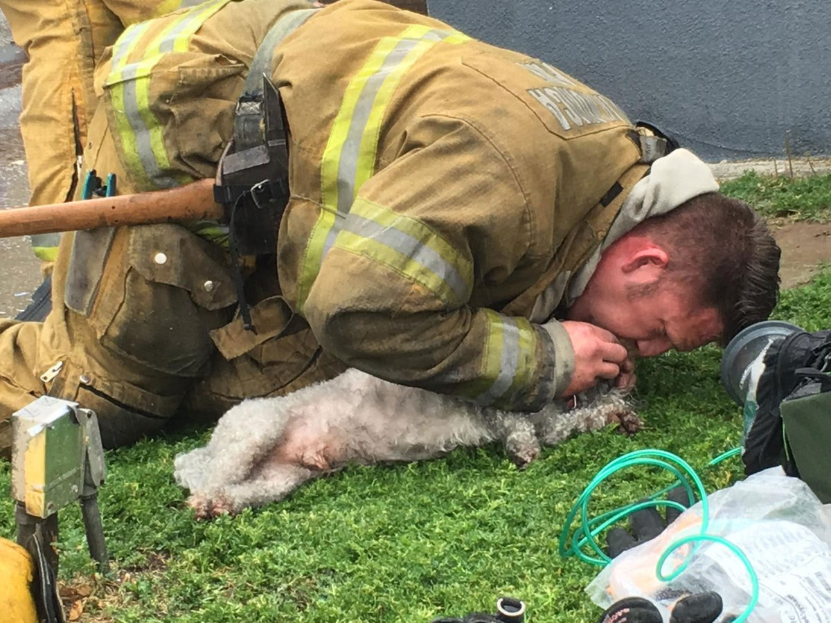California firefighters revive dog pulled from burning apartment after 20 minutes of mouth-to-snout resuscitation. https://t.co/0s6VtcYbRc