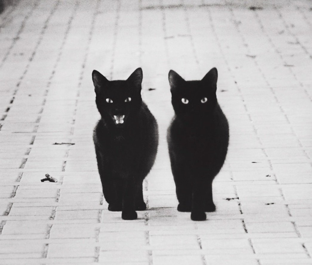 RT @evilbmcats: We are the flames of resistance, hunting like wolves in the shadows. https://t.co/dTWpADKZHZ