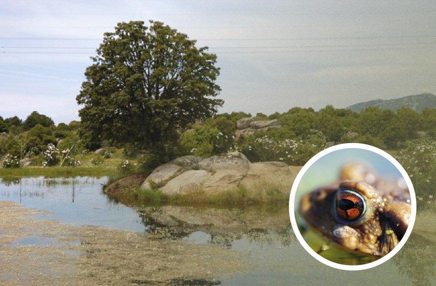 Hoyo de Manzanares alberga dos humedales y un entorno de gran valor ecológico @Ayto_Hoyo https://t.co/xm5zEfWtQc