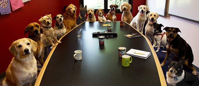 RT @justinshanes: Meanwhile, at today's meeting on feline healthcare... https://t.co/wApNyFS7jz